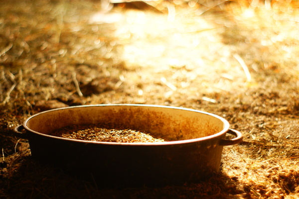 light: A bowl of grain.