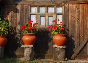Wood cabin Window: A window in a wood cabin, with two flowerpots in the front.