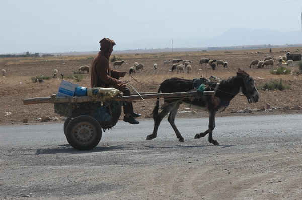 Donkey cart: Donkey cart somewhere in Morocco.