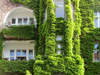 facade greening: facade greening in a residential street in Berlin, Germany.