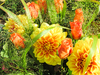 colourful dahlia and roses: colourful dahlia and roses