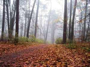 misty autumn: misty autumn