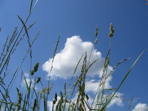 growing skywards: growing skywards