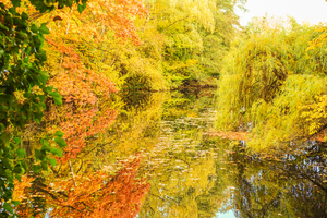 Hubertussee autumn color blast: Hubertussee autumn colour blast