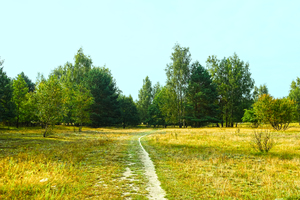 late summer walkway: late summer walkway