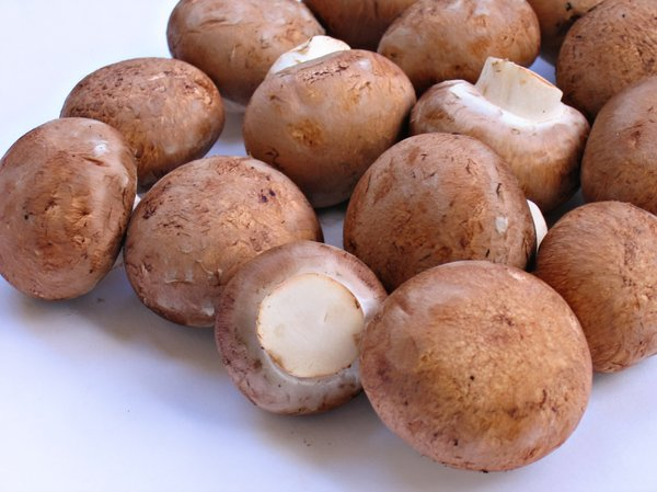 organic mushrooms: organic mushrooms