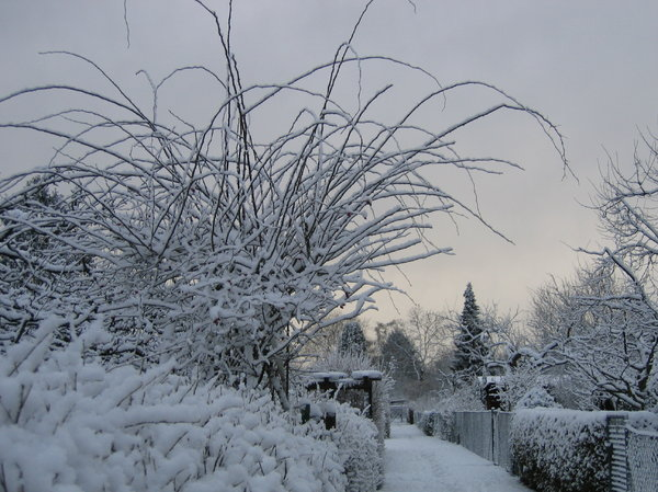 garden way in winter at sunset: this photo was taken just a few minutes footwalk away from where I live