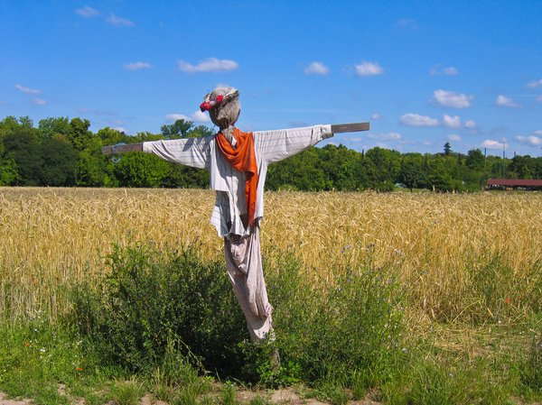scarecrow at wheat field: scarecrow at wheat field