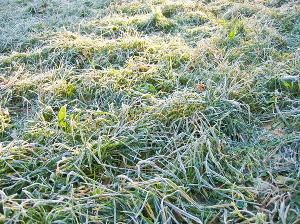 icy morning dew: icy morning dew