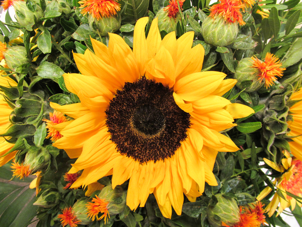 sunflower bouquet: sunflower bouquet