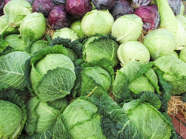 lots of cabbage 2: lots of cabbage 2