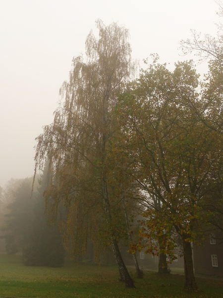 foggy october idyll: foggy october idyll