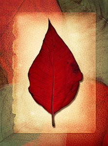 Leaf Collage: A vintage leaf collage. http://www.dreamstime.com/Billyruth03_portfolio_pg1#res246662