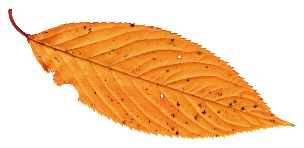 Leaf 3: A series of isolated leaves.