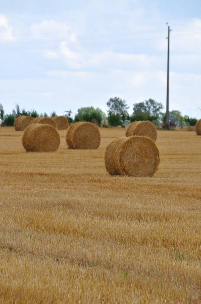 Hay bales  10: Hay bales in the field. Normandy France