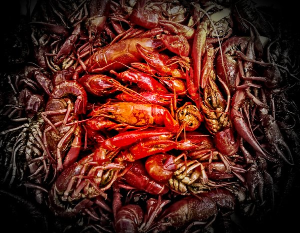 Crawfish: Crawfish on a graduated color filter from PS CS4.