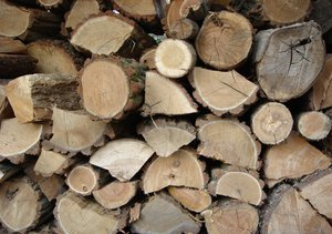 Wood stack: Stack of wood - cold winter is coming...