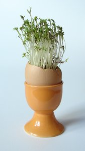 Easter egg: Easter egg with cress