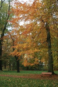Autumn in the park: autumn in the park