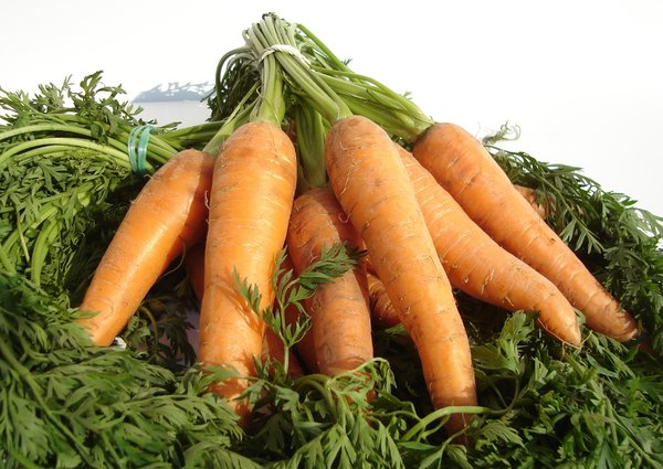 Carrot: Fresh tasty carrots