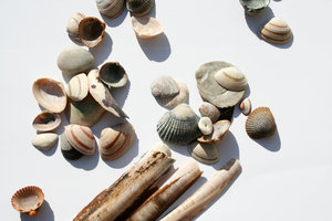 lots of shells: lots of sea shells on white (-ish) background