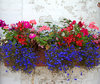 flower box: a perffusion of colourful flowers set against a decaying white wall backdrop