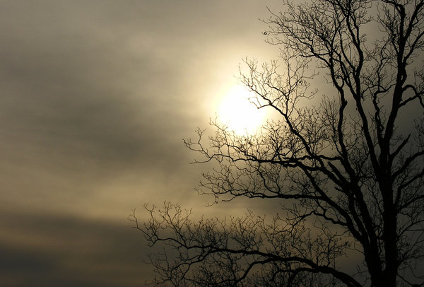 Winter Tree: I like the lines of a tree when the branches are bare it makes a great silhouette against the sun.