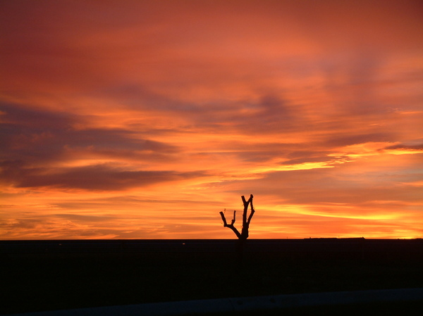 Dry tree and Sunset: A tree against the sun, in one of the most reddish sunsets I've ever seen