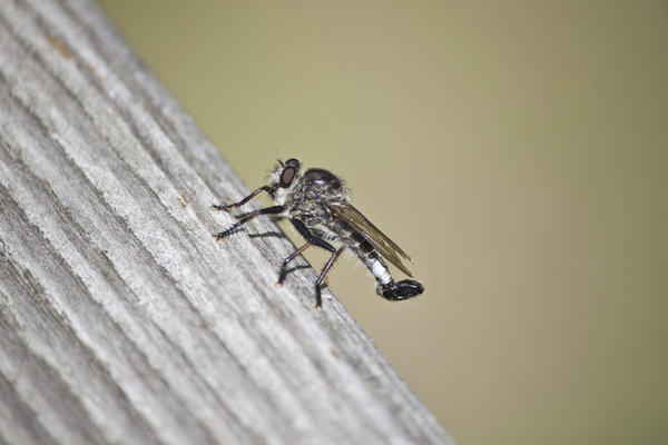 Fly on wood: Fly on wood