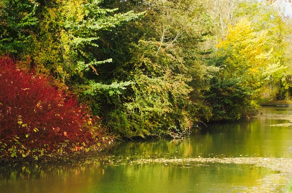 Oxford Canal: The oxford canal in autumn.