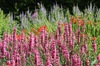 Flower border: Bright flower border in a formal garden
