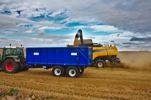 Combine Harvester: Combine harvester and trailer bringing in the harvest