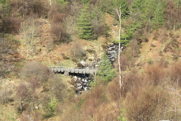 Forest bridge: A bridge in a wooded valley