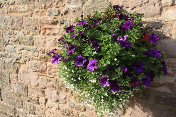 Hanging basket: Flowers in a hanging basket