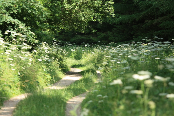 Woodland path: Path through sunny woodland