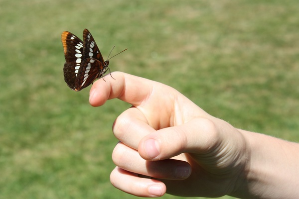 Butterfly on hand: Butterfly on hand