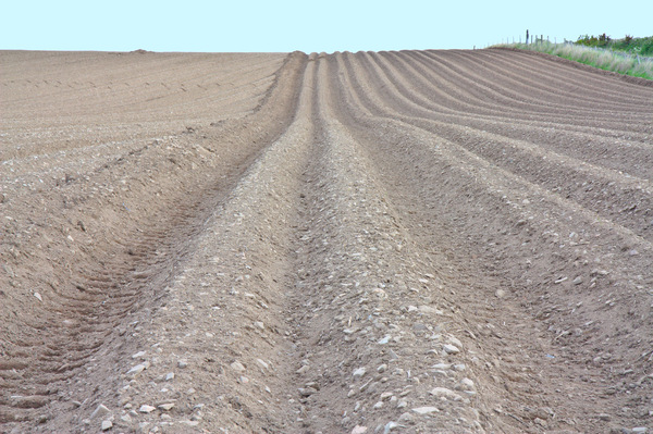 Ploughed field: A ploughed field ready for planting