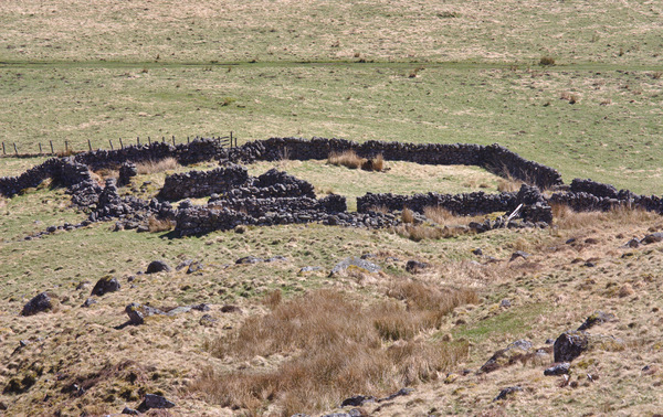Disused sheep pen: Disused/derelict upland sheep pen, with stone walls