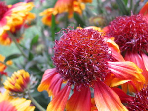 Indian Summer 4: Some flowers that really seemed to capture an Indian Summer.