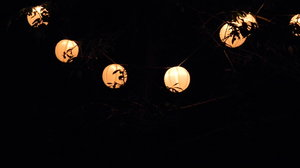 Japanese Lanterns: A string of Japanese Lanterns in our cherry tree.