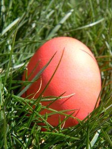 Easter Eggs: Some of our Easter eggs in the greenest part of our yard!