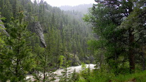 Poudre Canyon: Some pictures of the National Forest Lands in Poudre Canyon, CO. June, 2010.