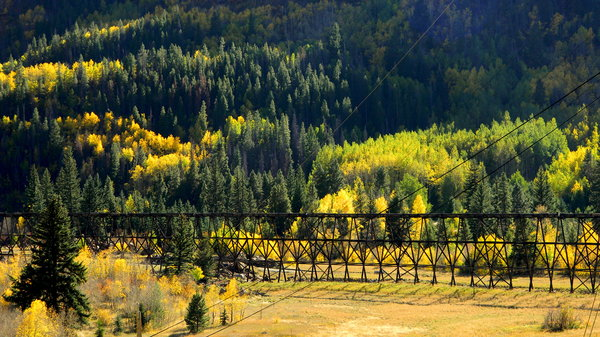 Colorado Color: The aspen trees changing up past Leadville, near Red Cilff, CO.
