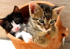 Kittens in a pot 3: My kittens hiding in a clay pot. Although playful, always ready for hunt!