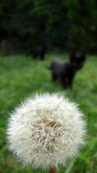 dandelion cat 1: curious cat
