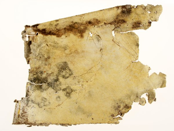 Grungy Canvas Texture: A moldy old piece of artist canvas that looks similar to a piece of a pirate map..