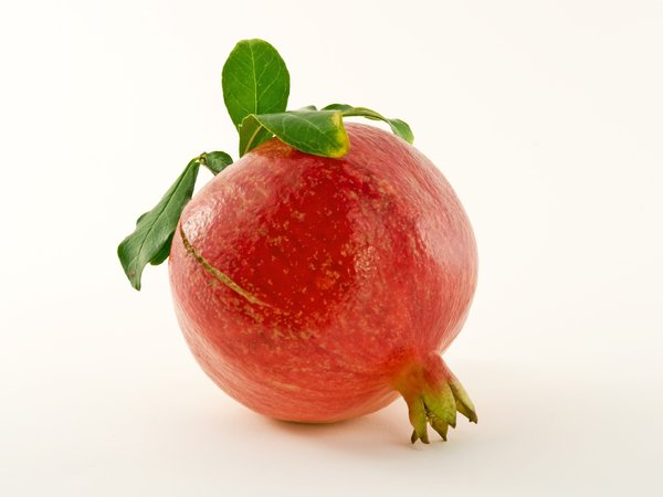 Pomegranate: A farm fresh pomegranate straight from the tree, isolated on a plain background.