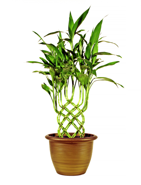 Potted Plant (improved): Same as image mfu07Pc