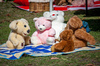 Teddy Bears Picnic: The teddy bear is a soft toy in the form of a bear. Photo captured a number of teddies on a springtime picnic in Recreation Park Tweed Heads NSW Australia.