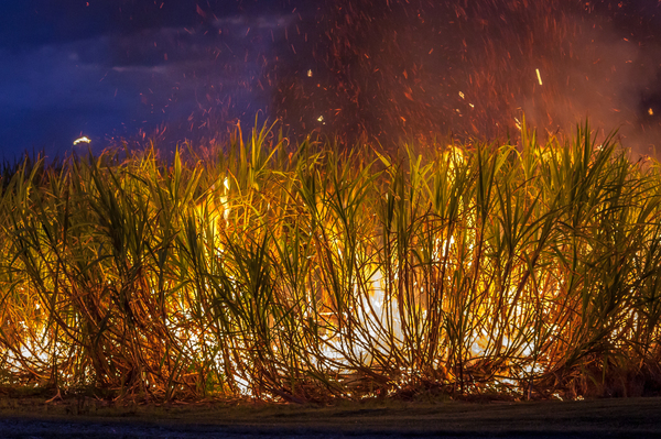 Sugar Cane Fire 2: Sugar cane being burnt by farmer at dusk prior to being harvested. Picture taken Nunderi NSW Australia